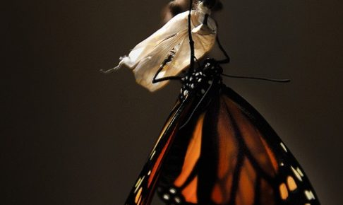 butterfly-1518060_640